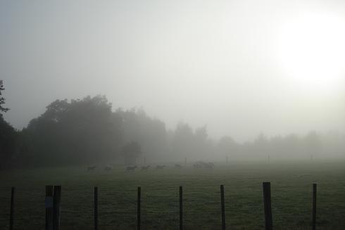 Morningwalkmark22